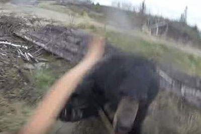 Terrifying Video Shows A Bear Charging Down A Hunter