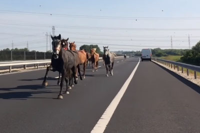 There's Nothing More Majestic Than A Pack Of Horses Cruising Down A Highway