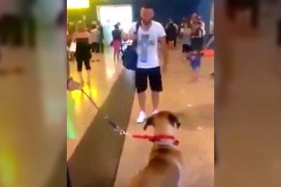 Dog Stops And Stares Intently At Owner He Hasn't Seen In 3 Years, Quickly Brings Everyone To Tears