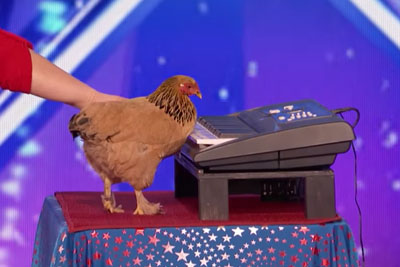 Chicken Plays Patriotic Tune On Keyboard On America's Got Talent