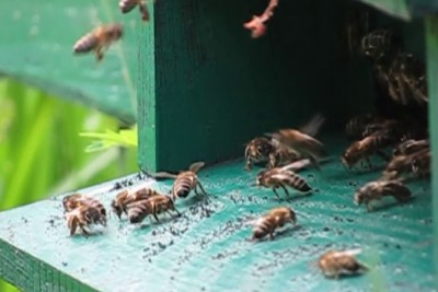 Bees Collisions In Slow Motion Is So Satisfying And Funny To Watch