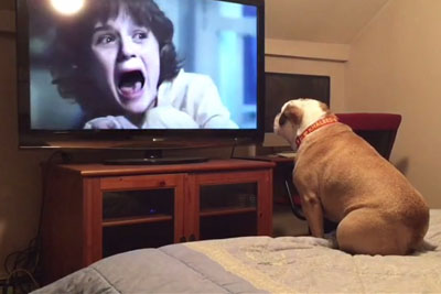 Bulldog Watches Horror Movie, And His Reaction Is All Of Us