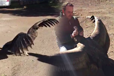 He Saved This Condor's Life Few Years Ago, Now Condor Came To Visit Him