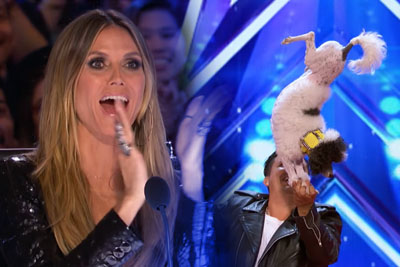 Dogs Stole Thow Whole Show On America's Got Talent, Judges Couldn't Believed Their Eyes
