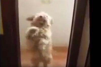 Dog Dancing Mambo