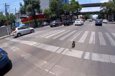 Cyclist In Mexico Chases A Frightened Dog Running Away On Traffic Road