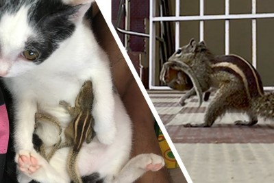 After A Man Rescued Four Baby Squirrels, He Never Expected What Would Happen Next
