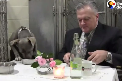 This Dog Was So Scared She Wouldn't Eat, What This Vet Did Is Going Viral