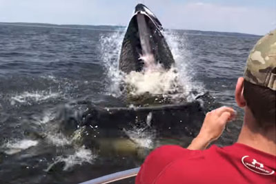 Spectacular Moment Huge Whale Breaches Just Inches From Fishermen