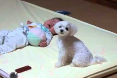Tiny Baby Is Upset, Watch How Their Dog Takes Control Of The Situation