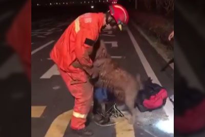 Dog Thanks Firefighter After Being Rescued From A Deep Well