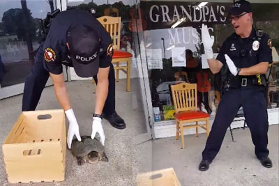 Cop Scared Of Turtle Steals All Attention, Video Of Him Is Going Viral