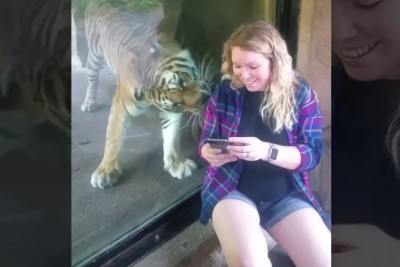 "Pregnant Woman Sits By Tiger For Selfie. Watch When He Notices Her ""Bump"""