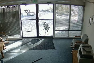 Security Camera Captures Moment When Goat Breaks Into Argonics' Colorado Office