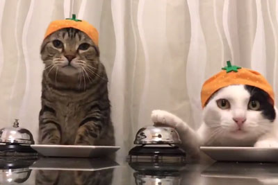 WATCH: Video Of Two Cats Asking Their Owner For Food Is Going Viral