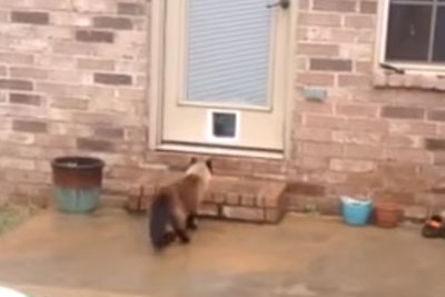 Dad Struggles For Hours To Install New Cat Door. The Cat's Reaction Has Internet In Laughter