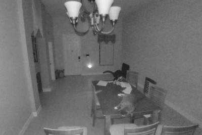 Cats Set Off The Alarm During The Night, Camera Captures Everything