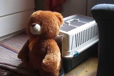Mom Sets Up Camera When Teddy Bear Keeps Disappearing, Captured Footage Is Hilarious