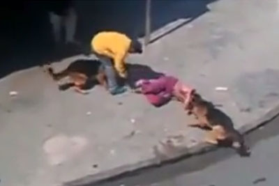 Idiot Was Throwing Bricks At Dogs, Then Dogs Take Care For Instant Justice