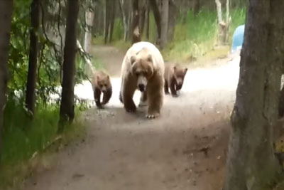 Guy Nervously Narrates His Encounter With A Grizzly And Her Cubs