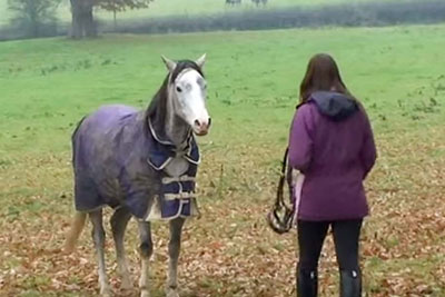 Young Woman Returns After 3 Weeks Away. When Her Horse Spots Her, Captured Footage Goes Viral