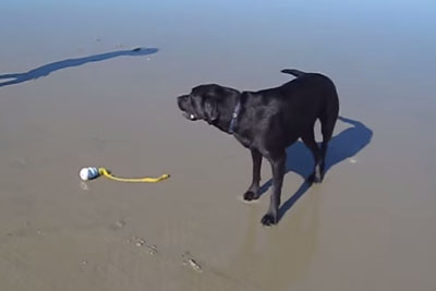 He Was Inside The Sea With His Dog. When Dog Barks, Owner Is Laughing In Tears