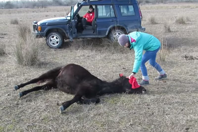 Vet Frees Chained Horse, Has No Idea He's About To Get The Thank You Of A Lifetime
