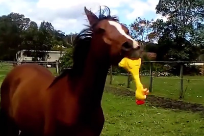 Horse Finds a Way to Make Rubber Chickens Funny Again