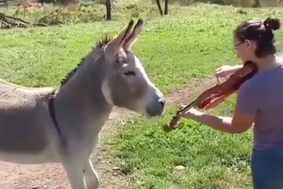 She Was Playing Her Violin, Then Donkey Stole Whole Attention With His Singing