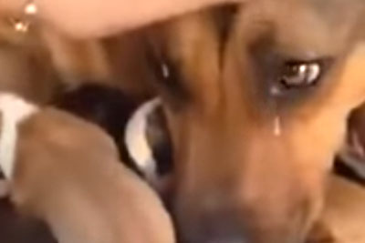 Dog Cries Real Tears After She Gets Reunited With Her Rescued Puppies