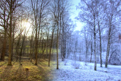 He Placed A Camera In The Woods For 365 Days. This Is How One Year Looks In 40 Seconds