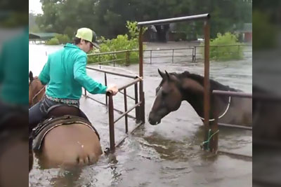 Teenager Jumps On His Horse After Hurricane Harvey, Saves Trapped Animals