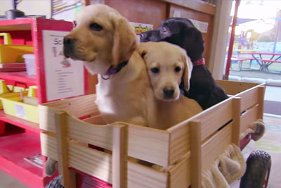For Every View Of This Video, A Pound Of Dog Food Will Be Donated To Shelters
