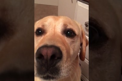 Owner Sings Worldwide Hit Next To His Dog, Then Dog Steals All Attention