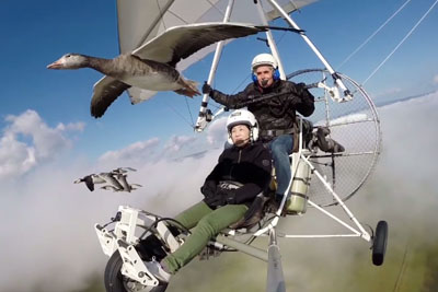 Two People On A Hang Glider Experience Meeting With Group Of Ducks