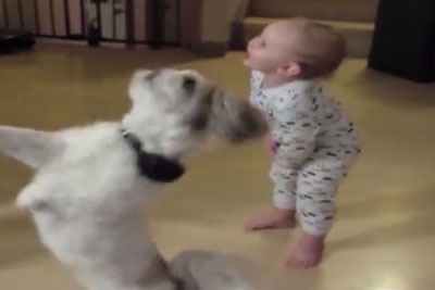 Dog Stands Up For A Treat, But It's The Baby Who You Need To Really Watch
