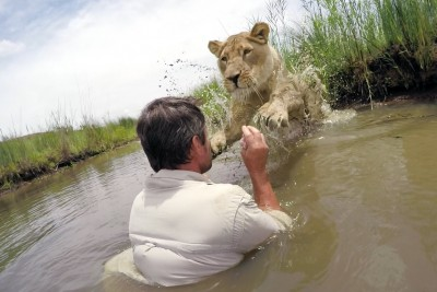 Man Straps Camera To Lioness Years After Saving Her Life, Then He Ignores Caution And Gets Up Close