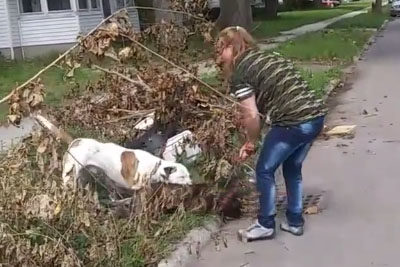 SHOCKING: Pit Bull Protects His Owner After Another Pit Bull Attacks Her
