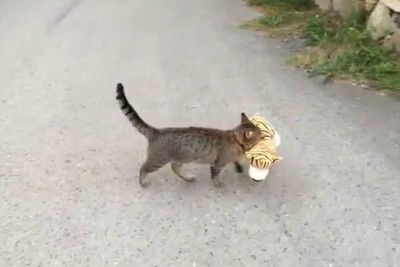 Owner Films Cat Going Into Neighbor's House. Sassy Cat Comes Back With Plans For Its New Toy