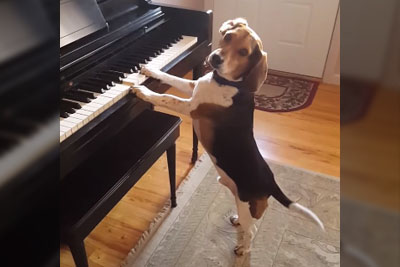 Dog Leans On Piano, Then Steals Whole Show In Next Second