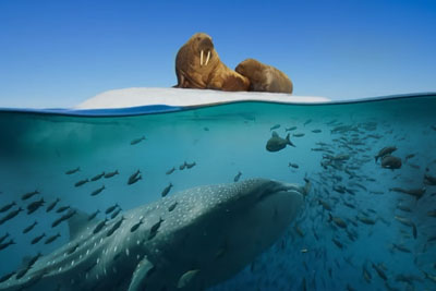 BBC's Video Of The Most Beautiful Moments Of Nature And Animals Is Going Viral Today