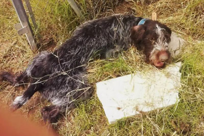 Dog Was Found Abused And Dying By Stream, Gains Energy To Wag Its Tail Upon Rescue