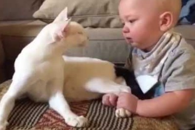 Baby Pulls On Cat's Legs, Animal's Response Is Going Viral