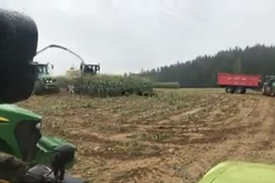 Footage Of Corn Harvesting Leads To Something Unexpected, Scene Is Going Viral