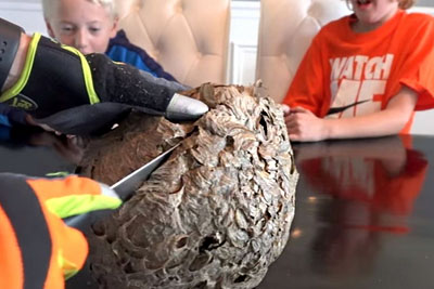 Dad Cuts Open A Wasp Nest. Discovery Inside Made Their Eyes Pop