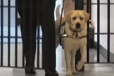Police Officer Enters Prison With Dog. Pay Attention To Dog's Reaction To Meeting This Inmate