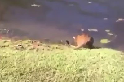 Guy Sneezes While Making A Video Of His Cat Next To A Lake, Then This Comedy Happens