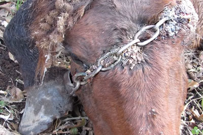 Horse Was Chained In The Middle Of A Forest For Years. His Reaction Says It All!