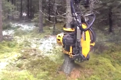 This Auto Logging Machine Is So Satisfying To Watch