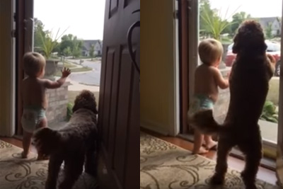 Baby And Pup Are Thrilled That Dad Is Home From Work